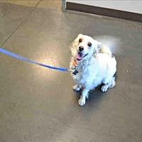 Adopt A Pet :: Minchu - Encino, CA
