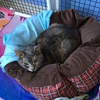 Adopt A Pet :: Missy - Cedaredge, CO