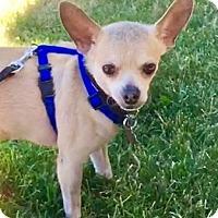 Adopt A Pet :: Jasper - Eugene, OR