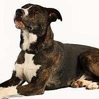 Adopt A Pet :: Andy - Pegram, TN