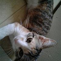 Adopt A Pet :: Abby - Honolulu, HI