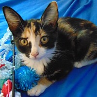 Adopt A Pet :: Monica - Newtown Square, PA