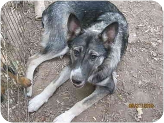 Cattle Dog Mix Dog for adoption in High View, West Virginia - Joe