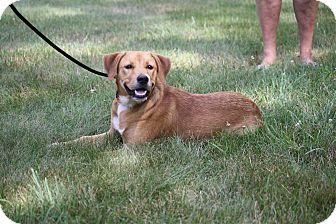 Labrador Retriever Mix Puppy for adoption in West Milford, New Jersey - SKYLAR