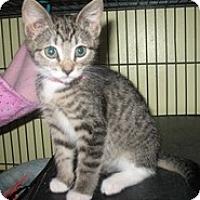 Adopt A Pet :: Mystery - Shelton, WA