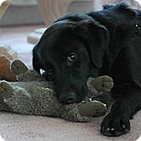 Adopt A Pet :: Jefferson - Philadelphia, PA