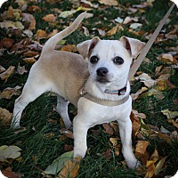 Adopt A Pet :: Freddy - Broomfield, CO