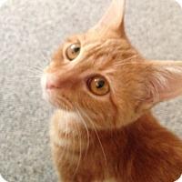 Adopt A Pet :: Mango - McDonough, GA