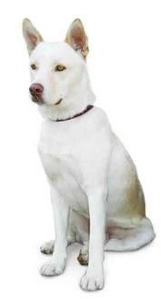 Labrador Retriever Mix Dog for adoption in Marina del Rey, California - JonJon