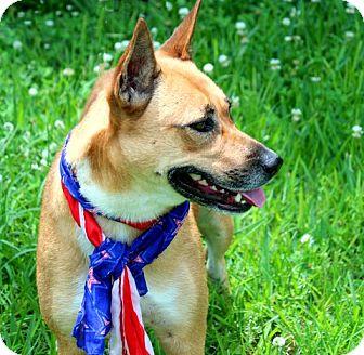German Shepherd Dog/Labrador Retriever Mix Dog for adoption in Ann Arbor, Michigan - A - JACKIE-O
