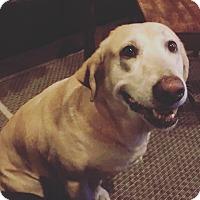 Adopt A Pet :: Babe - North Bend, WA
