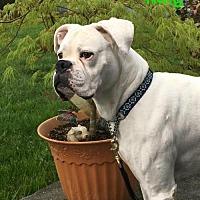 Adopt A Pet :: King - Woodinville, WA