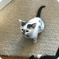 Adopt A Pet :: Ollie - San Jose, CA