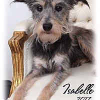 Adopt A Pet :: Isabelle - New Orleans, LA