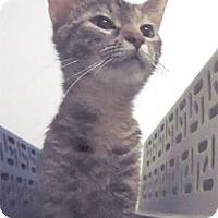 Adopt A Pet :: Bitsy - Waupaca, WI