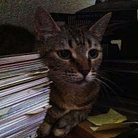 Adopt A Pet :: Tabitha - Sherman Oaks, CA