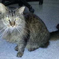 Adopt A Pet :: toot toot - Greensboro, NC