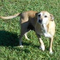 Adopt A Pet :: Lizzie - Allentown, NJ