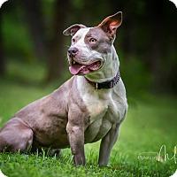 Adopt A Pet :: Phoebe - Sherman, CT