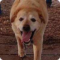 Adopt A Pet :: Jax's - Huntsville, AL