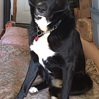Adopt A Pet :: TYSON - Oakbank, MB