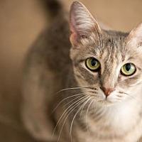 Adopt A Pet :: Casey - Hockessin, DE