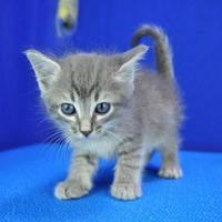 Adopt A Pet :: Harvey - Cabot, AR