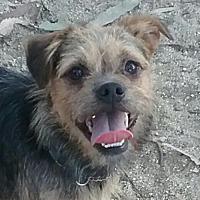 Adopt A Pet :: Winston Churchill - Newport Beach, CA