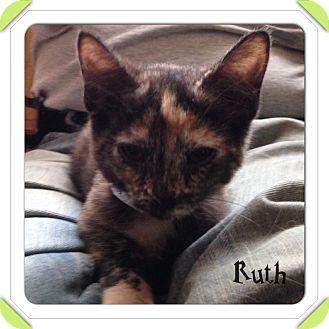 Domestic Shorthair Kitten for adoption in Warren, Ohio - Ruth