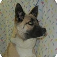Adopt A Pet :: Renee Tailwagger ADOPTED!! - Antioch, IL