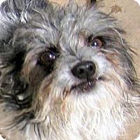 Adopt A Pet :: Oreo - Oakley, CA