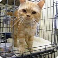 Adopt A Pet :: Marzipan - Modesto, CA