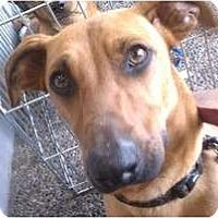 Adopt A Pet :: Isaac Newton - Fresno, CA