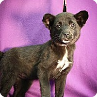 Adopt A Pet :: Boarder - Broomfield, CO