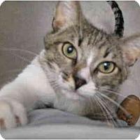 Adopt A Pet :: Forrest - Mesa, AZ