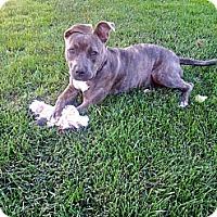 Adopt A Pet :: Penny - La Habra, CA