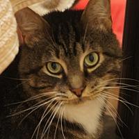 Adopt A Pet :: Templeton - Duluth, GA