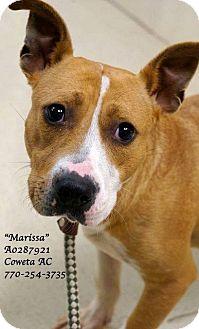 Basenji Mix Dog for adoption in Newnan City, Georgia - Marissa