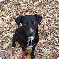 Adopt A Pet :: Eli - Saskatoon, SK
