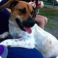 Adopt A Pet :: Hope - Morgantown, WV