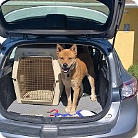 Adopt A Pet :: George URGENT FOSTER NEEDED! - Los Angeles, CA