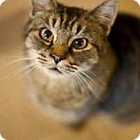 Adopt A Pet :: Eliza Doolittle - Columbia, MD