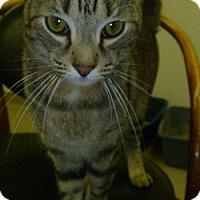 Adopt A Pet :: Beans - Hamburg, NY
