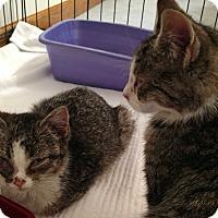 Adopt A Pet :: Trixie - Covington, PA