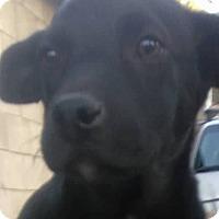 Adopt A Pet :: Logan - El Cajon, CA