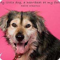 Adopt A Pet :: Rowdy - Roanoke, VA