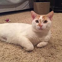 Adopt A Pet :: Winston - Asheville, NC