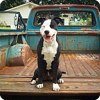 Adopt A Pet :: Casey - Eugene, OR