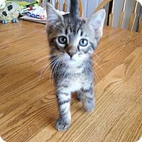 "Adopt A Pet :: Case "" A Real Charmer"" - Sedalia, MO"