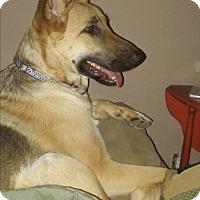 Adopt A Pet :: Leiben (Guest) - Roswell, GA